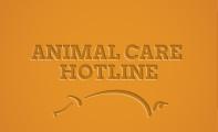 th-animal-care-hotline