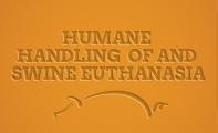 th-swine-handling-euthanasia