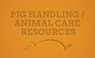 th-pig-handling-animal-care